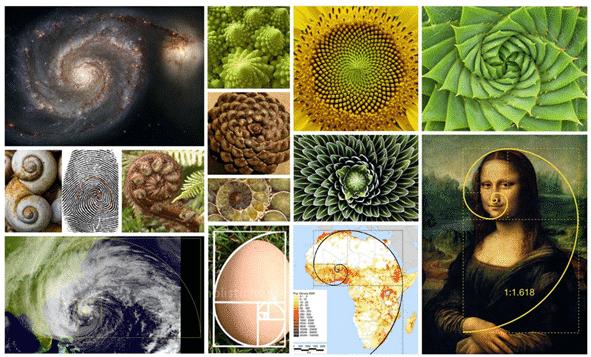 Fibonacci numbers nature