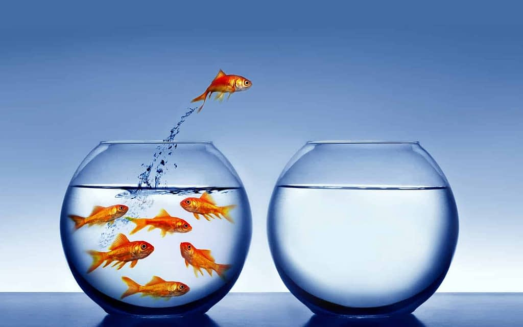 A fish jumping outside the water realizing what is water